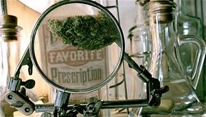 san francisco marijuana dispensary supplies