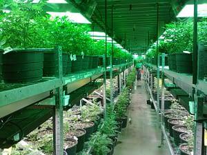 marijuana dispensary in san francisco