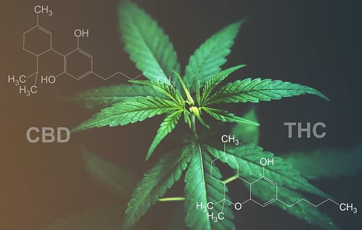 The cannabis plant and THC.