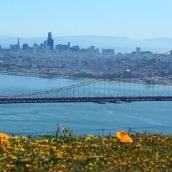 San Francisco Weed Dispensaries